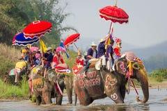 Elefant-Klassifikation Lizenzfreies Stockfoto