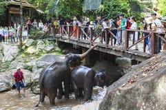 Elefant-Lager in Chiangmai Lizenzfreie Stockbilder