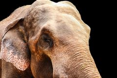 Elefant lokalisiert auf schwarzem Hintergrund stockbilder