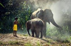 Elefant med barnet Arkivbild