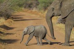 Elefant med en kalv Fotografering för Bildbyråer