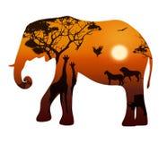 Elefant med konturer av djursavann Arkivbilder