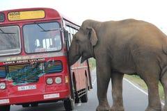 Elefant mit Bus stockfotos