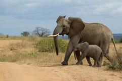 Elefant mit Kind lizenzfreie stockbilder