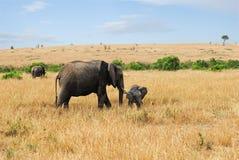 Elefant mit Schätzchen lizenzfreie stockfotos