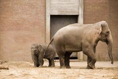 Elefant mit Schätzchen Stockfoto