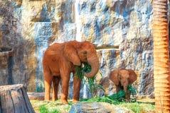 Elefant mit Schätzchen Stockfotografie