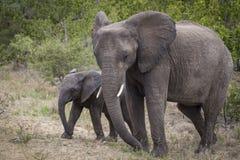 Elefant mit Schätzchen lizenzfreie stockbilder