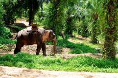 Elefant mit seatmount Lizenzfreies Stockbild