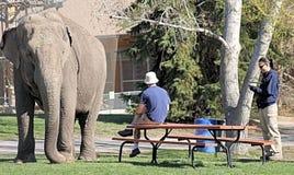 Elefant mit Trainern Lizenzfreie Stockbilder