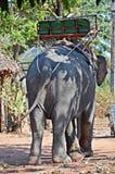 Elefant mit Trekkingsbank Stockfotografie