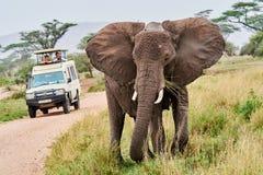 Elefant mit Trinkwasser des Babys im Tanzania-Safaristoßzahn stockbilder