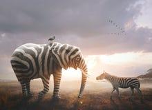 Elefant mit Zebrastreifen lizenzfreie stockfotografie