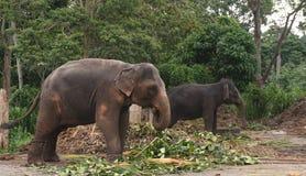 Elefant mit zwei Gef?ngnissen lizenzfreie stockfotos