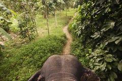 Elefant na selva Imagens de Stock