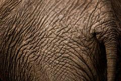 Elefant nach stockbilder