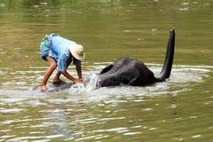 Elefant nehmen ein Bad Lizenzfreie Stockfotos