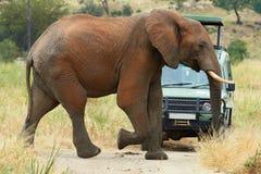 Elefant och bil Royaltyfri Foto