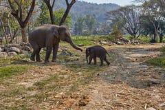 Elefant och hennes barn arkivbild