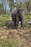 Elefant och hennes barn royaltyfri fotografi
