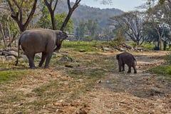 Elefant och hennes barn royaltyfri foto