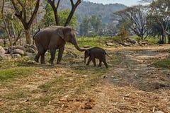 Elefant och hennes barn fotografering för bildbyråer