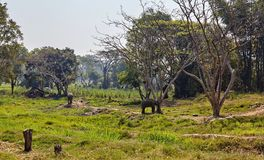 Elefant och hennes barn royaltyfria foton