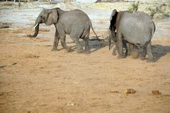 Elefant och kalv på en loge arkivbilder