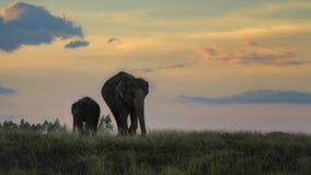 Elefant och mahout royaltyfri bild