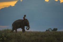 Elefant och mahout arkivfoto