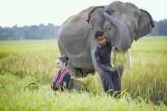 Elefant och mahout arkivbilder
