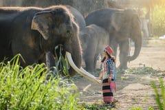 Elefant och mahout royaltyfria foton