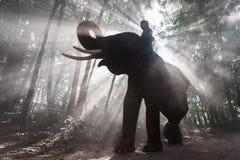 Elefant och Mahout på det Surin landskapet, Thailand fotografering för bildbyråer