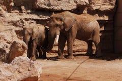 Elefant och elefant som går i naturen på en varm sommardag fotografering för bildbyråer