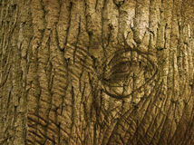 Elefant oder Baum Lizenzfreies Stockbild