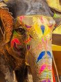 Elefant på Amber Fort Arkivfoto