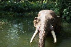 Elefant på disneyland arkivbild