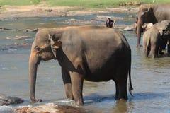 Elefant på en brunnsort Royaltyfria Foton