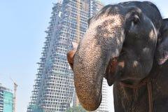 Elefant på en upptagen stad Arkivbild
