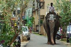 Elefant på gator Arkivfoton