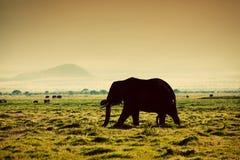 Elefant på savanna. Safari i Amboseli, Kenya, Afrika Royaltyfri Fotografi