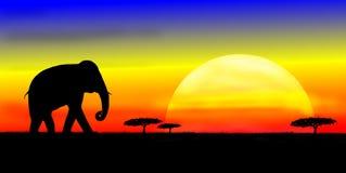 Elefant på savannah Arkivfoton