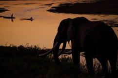 Elefant på solnedgången Royaltyfri Fotografi