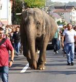 Elefant på vägen Arkivbild