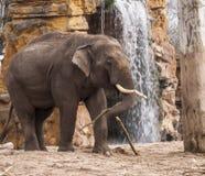 Elefant på vattenfallet Royaltyfri Fotografi