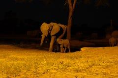 Elefant på waterhole på den Senyati safari på natten Royaltyfri Foto