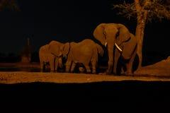 Elefant på waterhole på den Senyati safari på natten Royaltyfria Foton