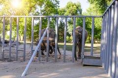 Elefant på zoo royaltyfria foton