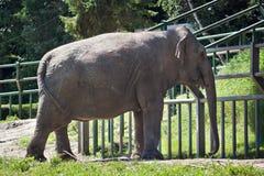 Elefant på zoo Royaltyfria Bilder
