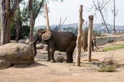 Elefant på zoo royaltyfri fotografi